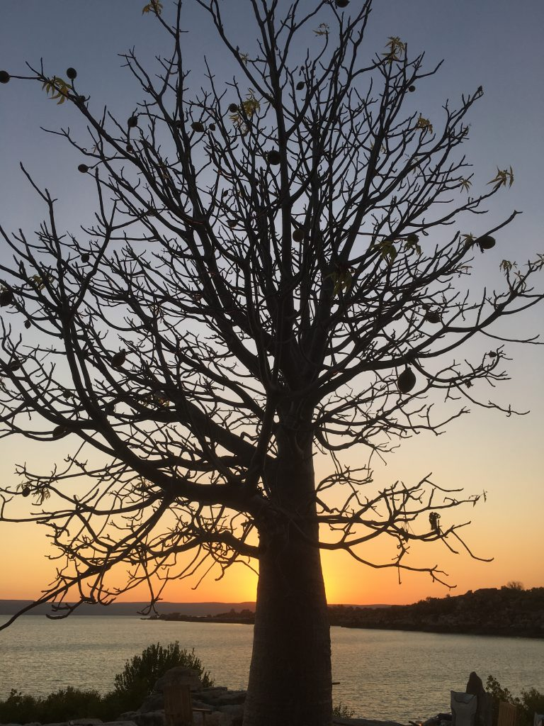 KIMBERLEY SUNSET – BOAB TREE