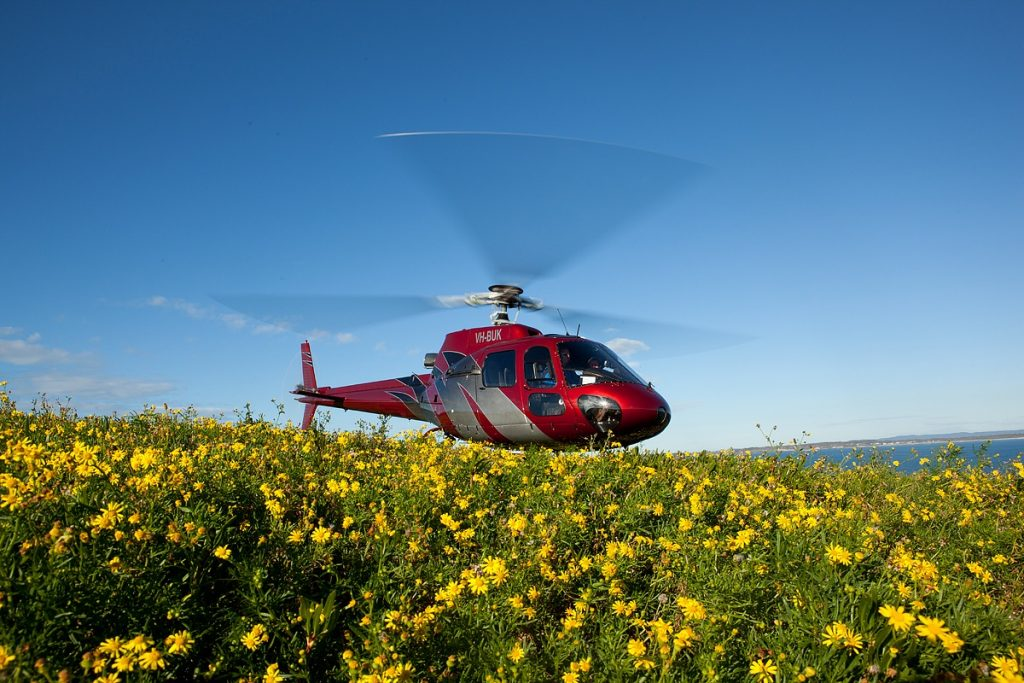 Helicopter landing in the wild flowers Compass